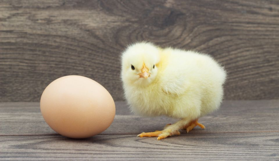 Cine a fost primul: oul sau remediul pentru cancer?