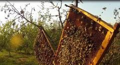 """Vindecați de cancer cu miere și plante. Povestea omului care a avut o """"tumoră cât capul unui copil"""" (VIDEO)"""