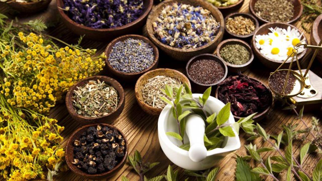 Cateva plante medicinale ce se recomanda pentru leucemie