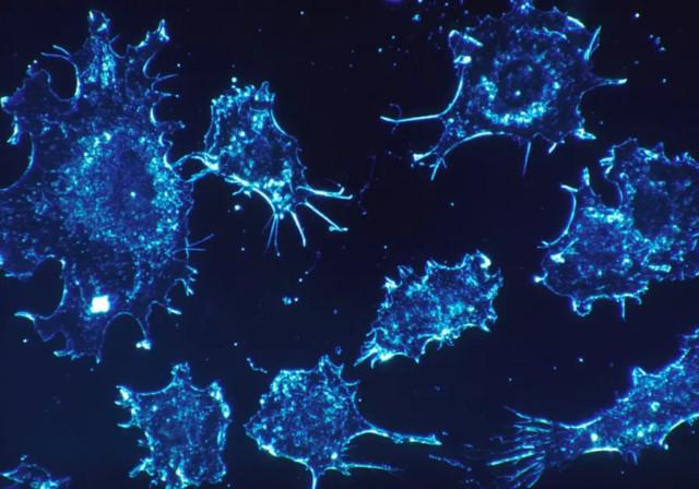Cercetătorii au descoperit o moleculă