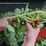 Planta de aur care tămăduiește mii de boli printre care și cancerul