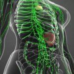 Stimulează sistemul limfatic la capacitatea maximă de funcționare, ca să scapi de virusuri și toxine, evitând îmbolnăvirea gravă