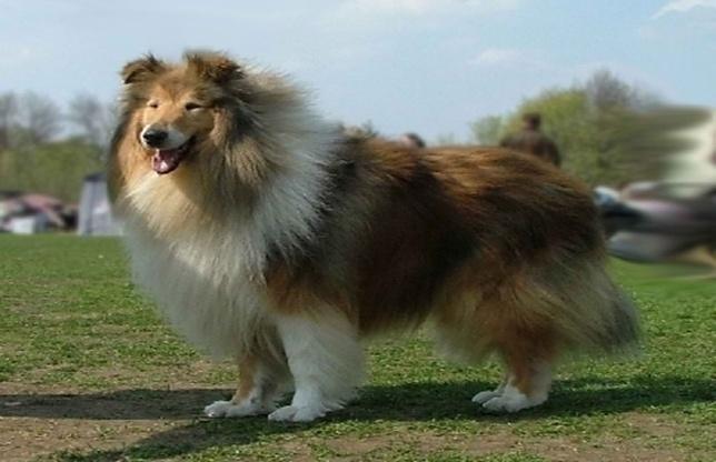 INCREDIBIL! Câinii pot detecta CANCERUL de prostată cu o acurateţe de 4 ori mai MARE decât testele medicale